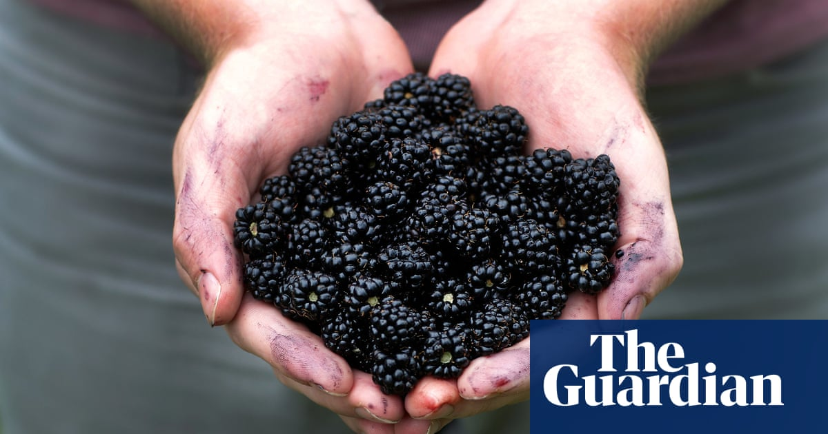 10 of Britain's best pick-your-own fruit farms, chosen by readers