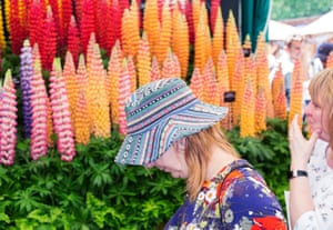 A woman in a patterned sunhat by a display of lupins