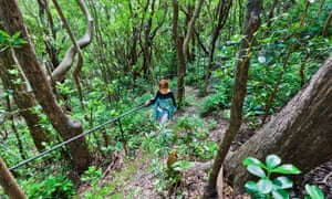 Grenade Hall Forest, Barbados