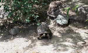 If Texas tortoises die, the economy in many of Texas's southernmost towns might die too.