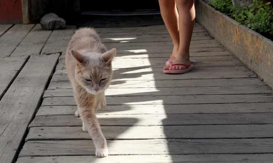 Stubbs, the honorary feline mayor of Talkeetna, Alaska, walks out of the West Rib Bar and Grill in 2016.