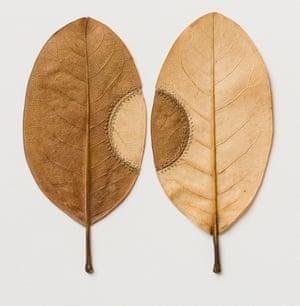 Trans-Plant No 21, a leaf sculpture by Susanna Bauer