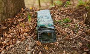 Traps laid for grey squirrels in Cumbria.