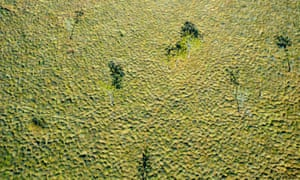 Tussock grass plain, from the air. Wongalara Station Reserve, south-east Arnhem Land, Northern Territory, Australia.
