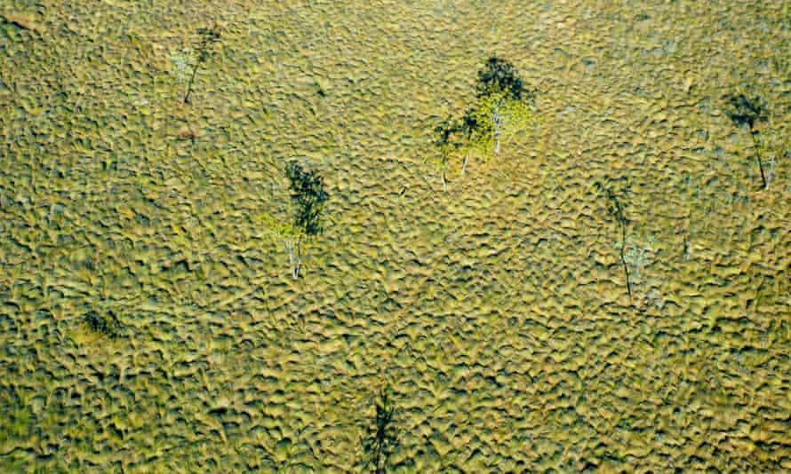 Tussock grass plain, from the air. Wongalara Station Reserve, south-east Arnhem Land, Northern Territory, Australia.