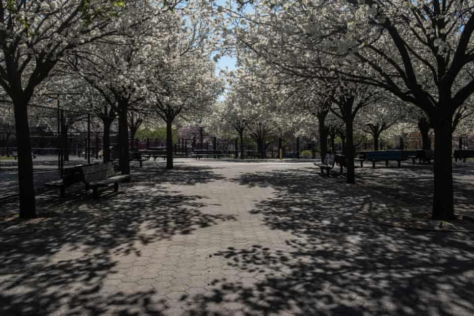 Cherry blossoms at an empty park in Williamsburg, Brooklyn on 27 March 2020. Photo By Jordan Gale