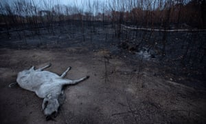 The Amazon suffered colossal damage after last year's fires.