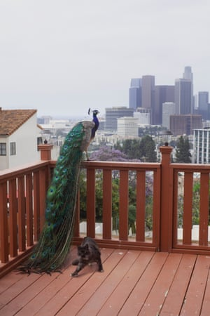 Josh Schaedel, Peacock & Cat, 2018; Courtesy of the artist