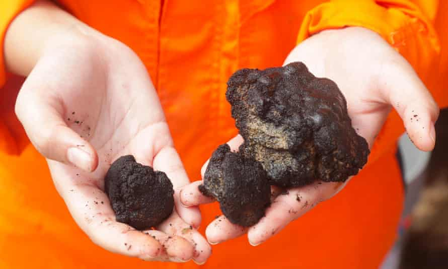 Polymetallic nodules recovered for research.