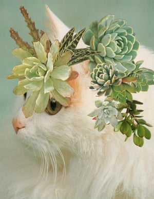 A collage of a cat with succulents on its head by Stephen Eichhorn
