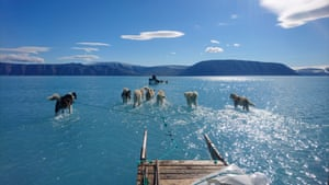 Sled dogs in melted ice water, Greenland