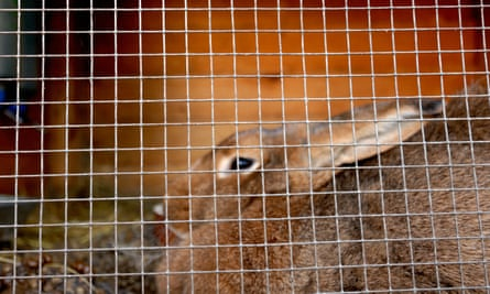 Rabbit in rabbit hutch