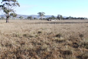 Native grassland in one of the few formal reserves set aside for this plant community, Turallo Nature Reserve, near Bungendore, NSW.