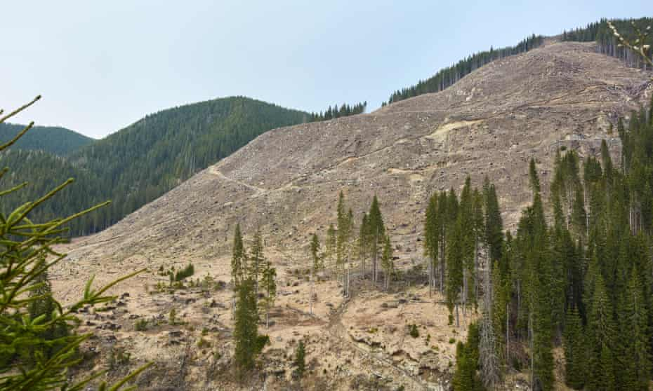 A deforested hillside.