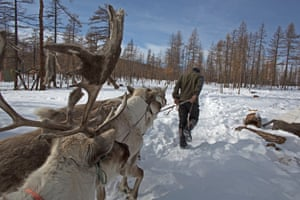 Oltsen leads his herd of reindeers through the thick snow in the Tengis Shishged national reserve
