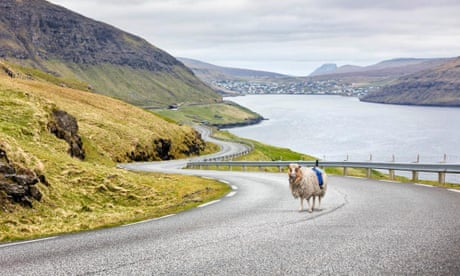 Faroe Islands fit cameras to sheep to create Google Street View