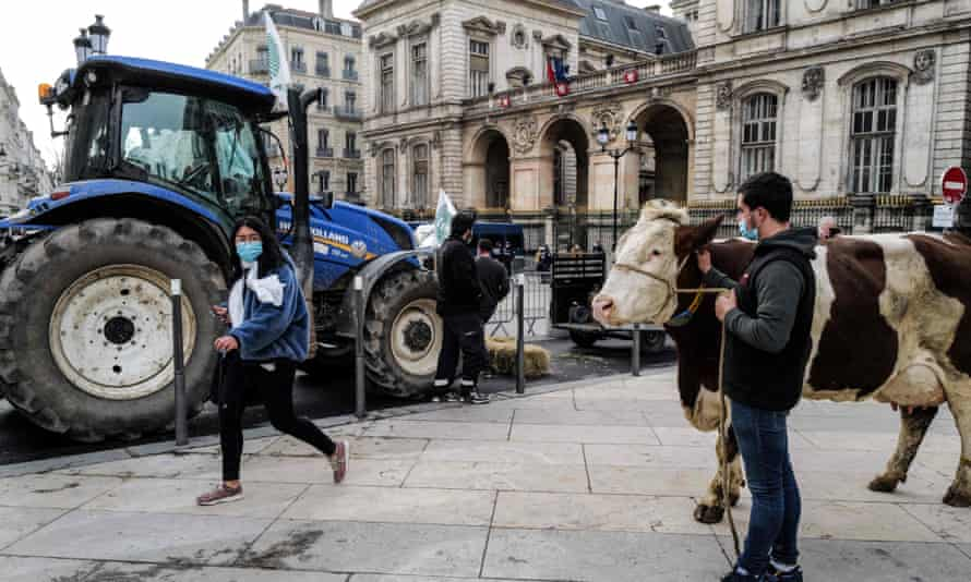 A woman walks by a farmer with a cow on the square facing the city hall of Lyon on 22 February 2021.