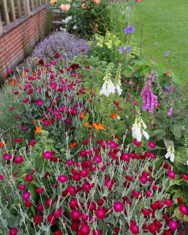 One of Charles' no dig flower borders in July, in Homeacres in Somerset.