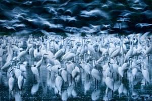 Zsolt Kudich, Great egret awakening, Finalist, Birds