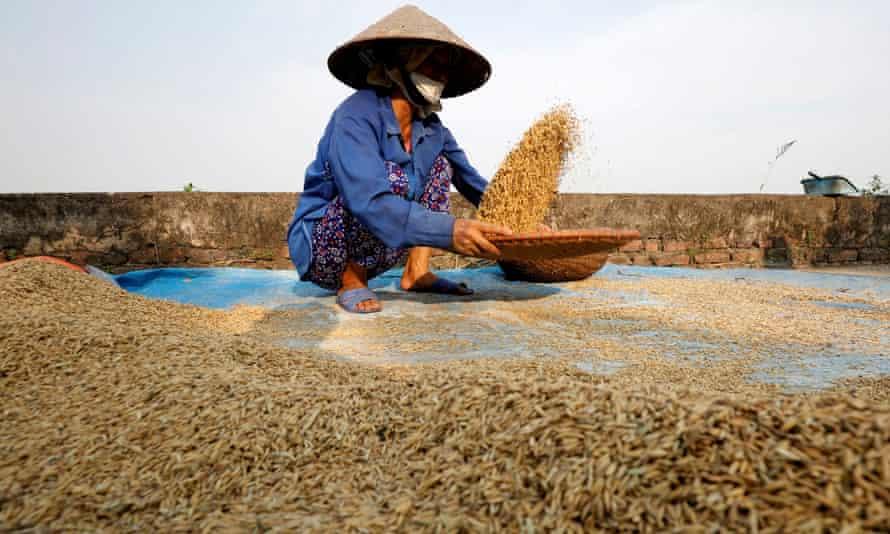 Farmer in rice field outside Hanoi, Vietnam