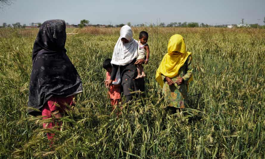 Trafficked brides work on a farm in the northern Indian state of Haryana.