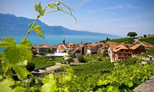 St Saphorin vineyard in Lavaux valley, Switzerland.