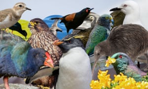 New Zealand native birds