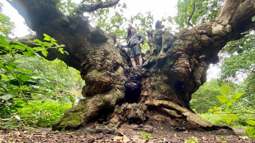 Writer Kevin Rushby and an ancient oak near Manningtree, Essex.