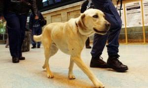 Sniffer drug dog