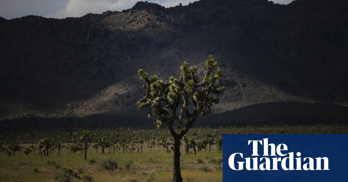 California couple fined $18,000 for illegally uprooting 36 Joshua trees