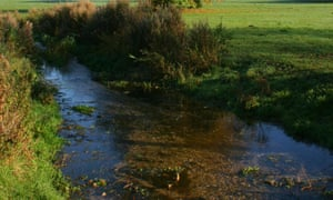 A chalk stream in the Chilterns
