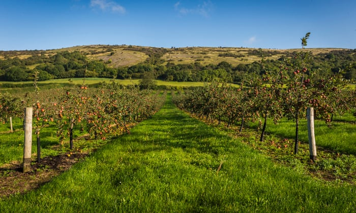 Take the cider orchard quiz: could you care for apple trees?