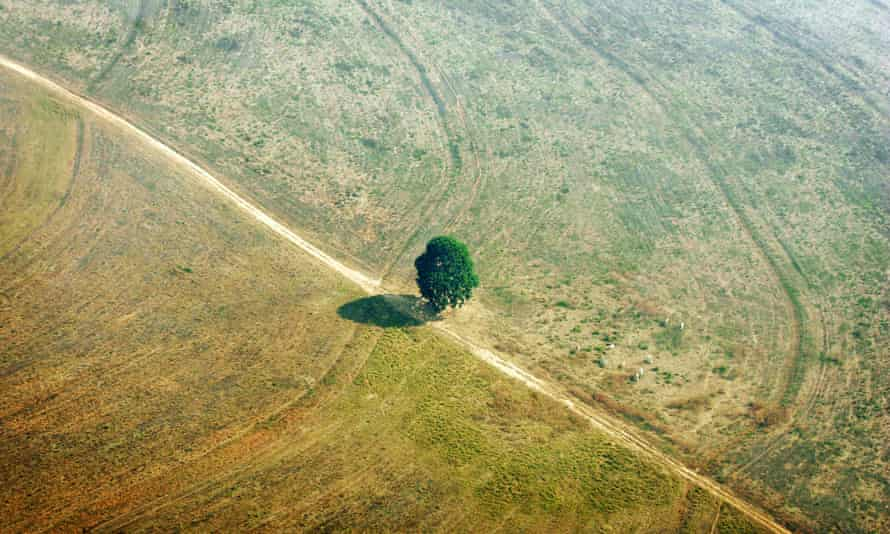 Mato Grosso, Brazil: A single tree is seen on land that was previously jungle.