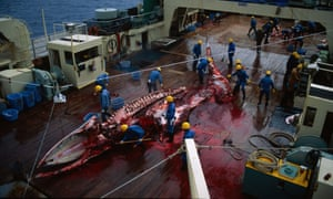 A stripped carcass of a whale lies on the deck in a pool of blood on a Japanese vessel in the Antarctic, 1993.