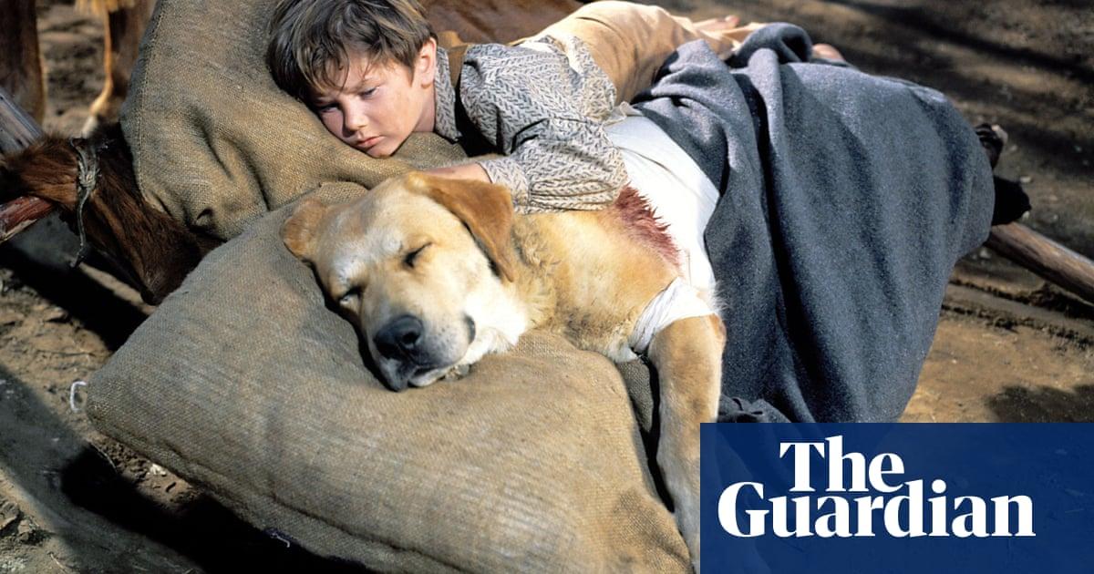 Dog weepie movies – ranked!
