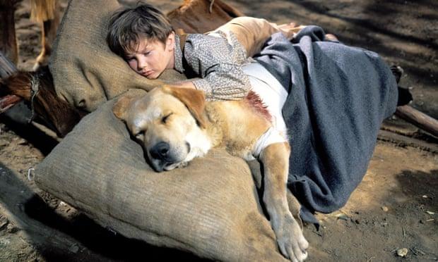 theguardian.com - Anne Billson - Dog weepie movies - ranked!