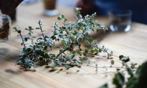 The fynbos plant, a kind of wild sage, is used for the flavouring of different kinds of gin.