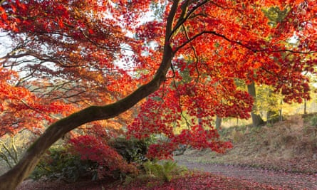 A splash of red at Winkworth Arboretum in Surrey in early autumn.