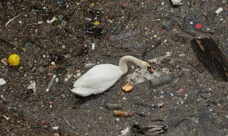 A swan swims among the rubbish and pollution thrown into the River Thames in London