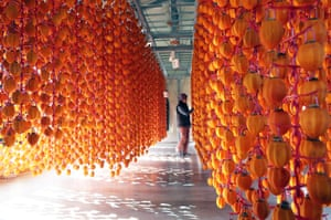 South KoreaA farmer tends to persimmons, which are being hung for drying, at a farm in Jangseong