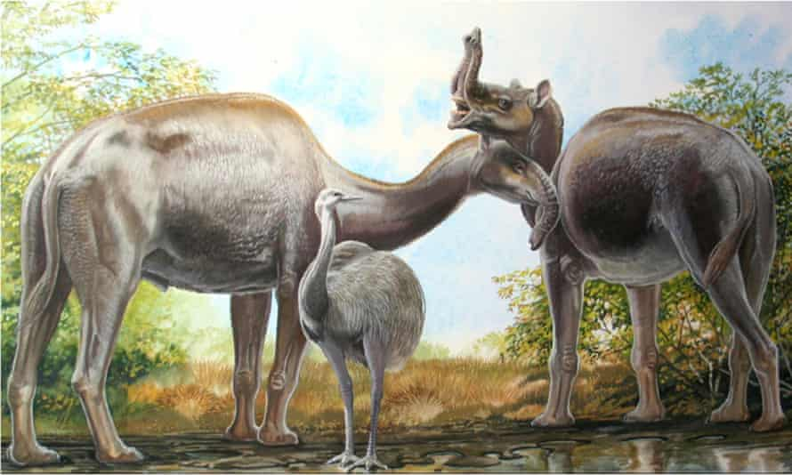 An artist's rendering shows the South American native ungulate Macrauchenia patachonica which had a number of remarkable adaptations, including the positioning of its nostrils high on its head. Researchers say they have now understood the beast's origins.