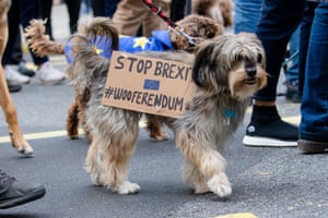 "A dog at the ""Wooferendum"" protest march in London on Sunday 7 October"