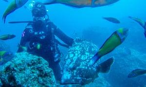 Diving off Garajau beach