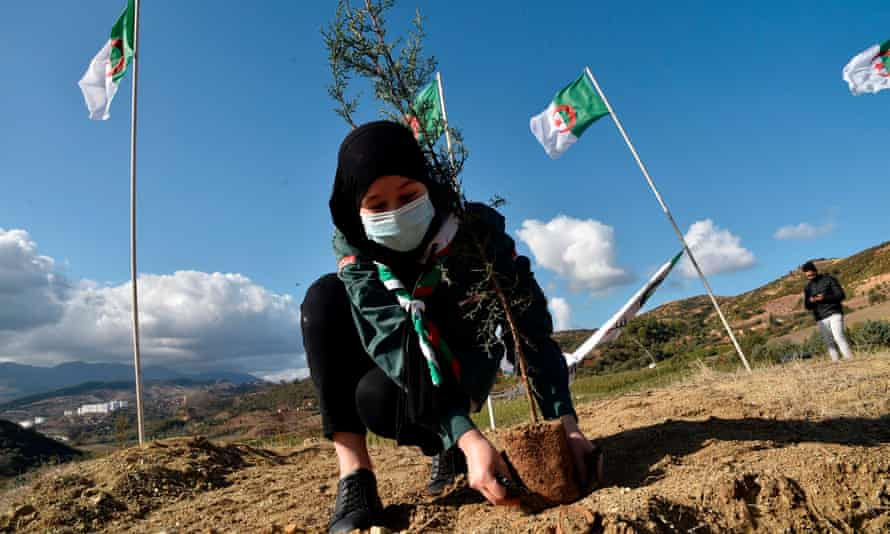 Algerian scouts take part in a countrywide tree-planting campaign in the Tipaza region