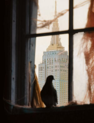 From Andrew Garn's The New York Pigeon