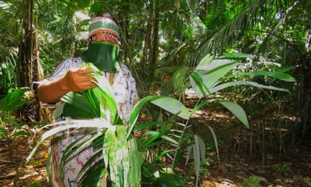An indigenous member of the Shipibo people uses a facial mask made of leaves while pointing to a tree, in the province of Uyacali, Peru, in a photograph provided by the Amazon indigenous federation Aidesep.
