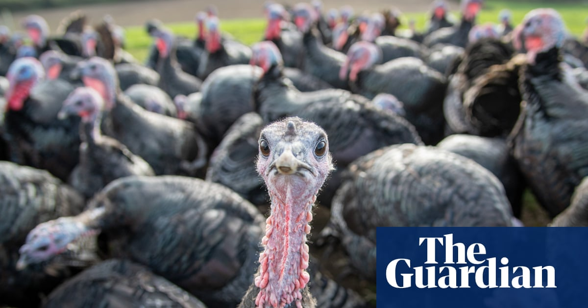 Early bird special: turkey for Christmas? You may already be too late to buy one