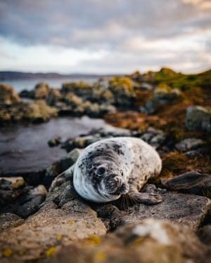 Close-Up Of Seal On RockPhoto taken in Belfast, United Kingdom