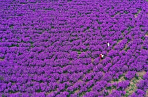 Bozhou, China: The Sea of Flowers attraction in full bloom