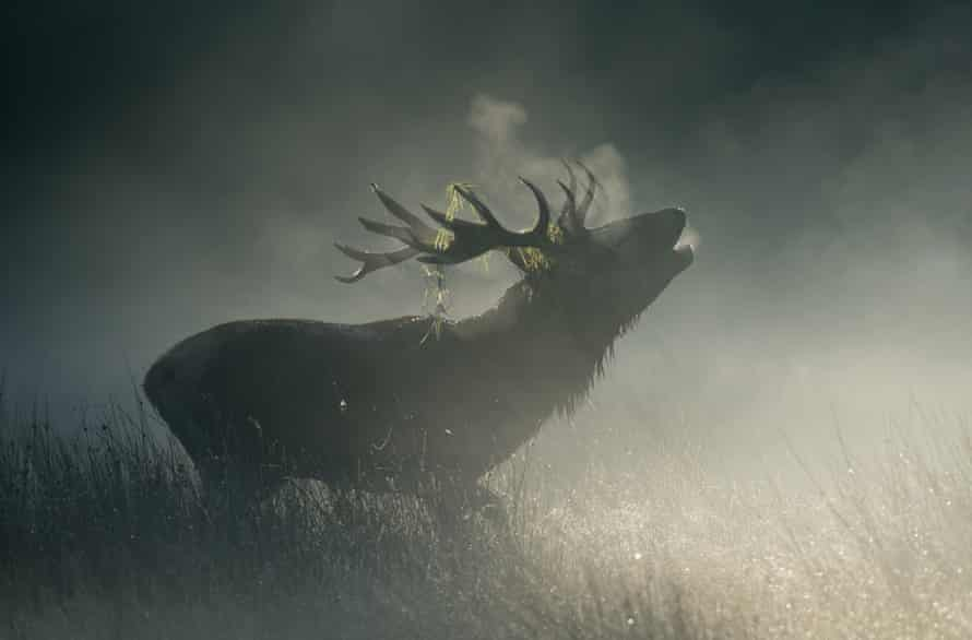 Stag in Richmond Park, London